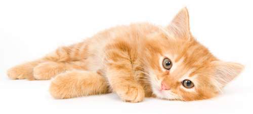 Reclining Kitty