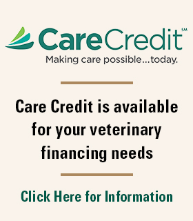 Care Credit Home Page Block