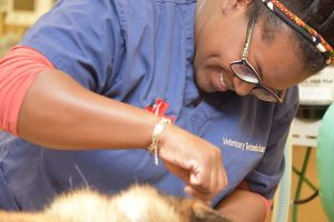 GSVS Veterinary Technician